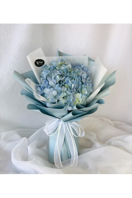 Blue Ice Hydrangea
